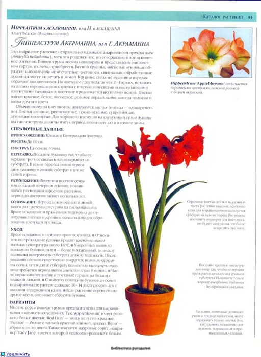 комнатные растения (47) (512x700, 225Kb)