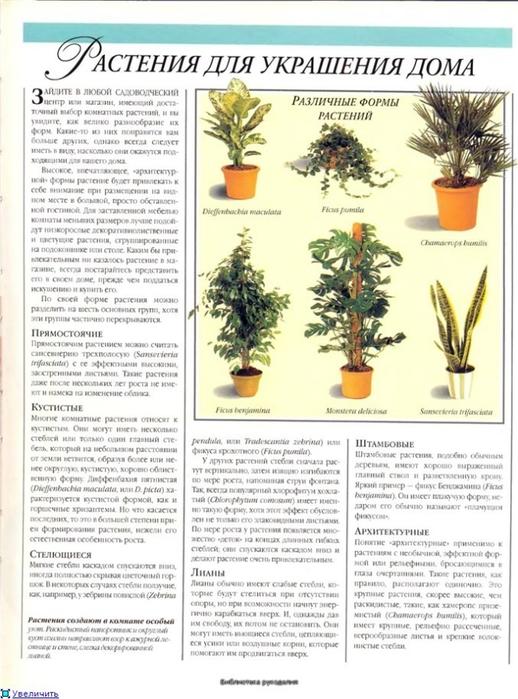 комнатные растения (50) (518x700, 252Kb)