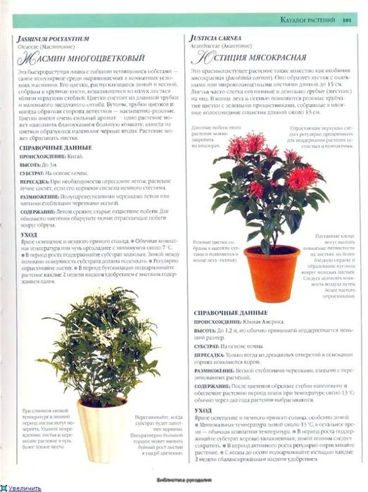 комнатные растения (54) (523x700, 230Kb)