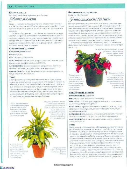 комнатные растения (56) (526x700, 247Kb)