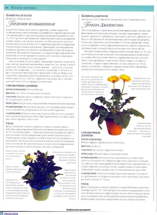 комнатные растения (60) (511x700, 236Kb)