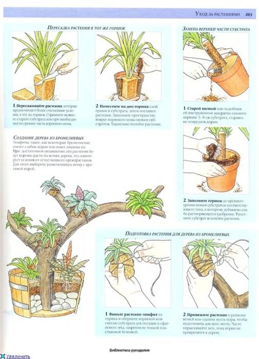 комнатные растения (66) (504x700, 228Kb)