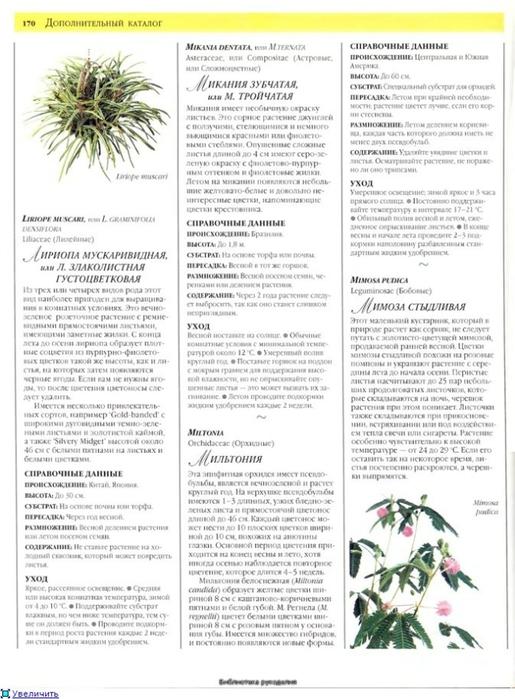 комнатные растения (69) (515x700, 228Kb)
