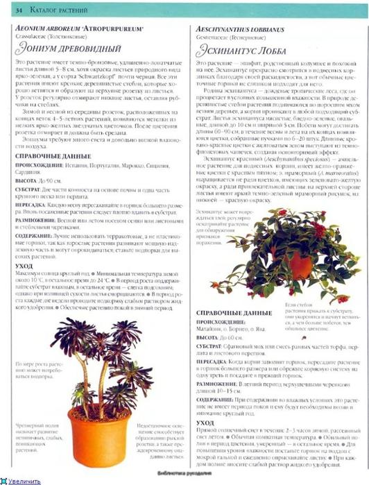 комнатные растения (72) (532x700, 259Kb)