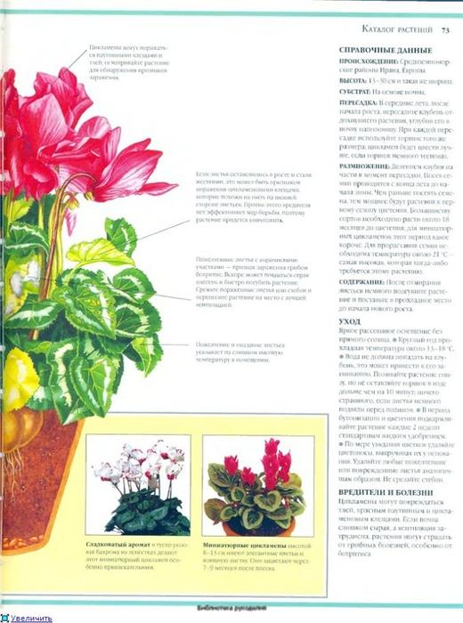 комнатные растения (76) (520x700, 233Kb)