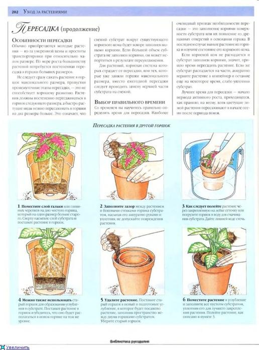 комнатные растения (78) (516x700, 245Kb)