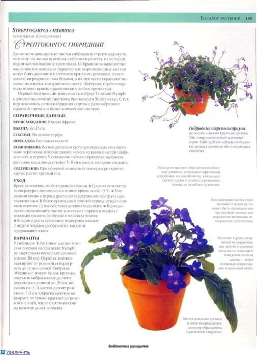 комнатные растения (83) (505x700, 212Kb)