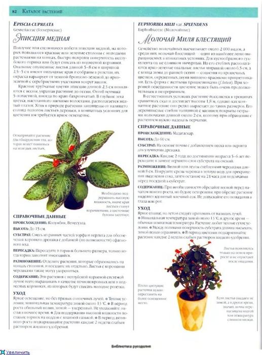 комнатные растения (84) (517x700, 245Kb)