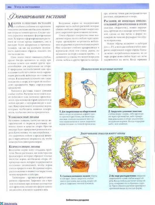 комнатные растения (85) (529x700, 259Kb)