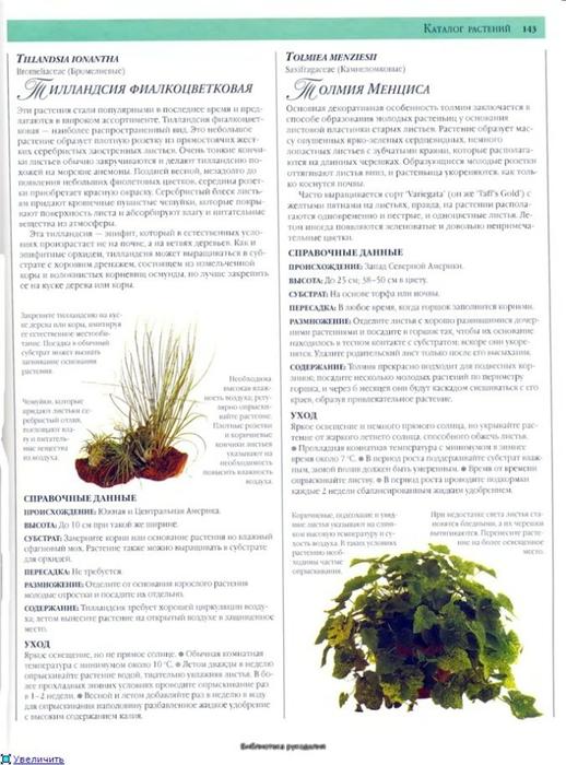 комнатные растения (90) (518x700, 241Kb)