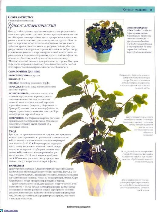 комнатные растения (93) (518x700, 240Kb)