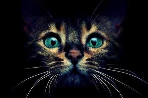 cats01 (600x399, 39Kb)