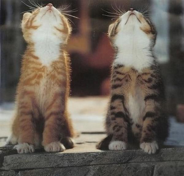 cats05 (600x573, 61Kb)