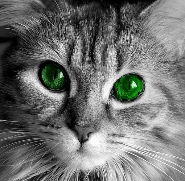 cats09 (600x587, 133Kb)