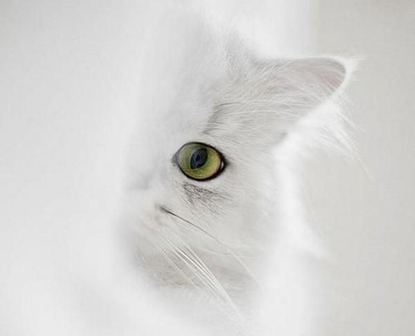 cats13 (600x486, 28Kb)