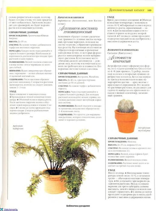 комнатные растения (99) (518x700, 221Kb)