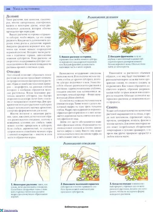 комнатные растения (101) (505x700, 257Kb)