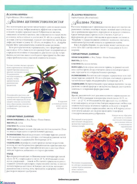 комнатные растения (103) (523x700, 236Kb)