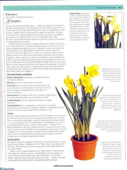 комнатные растения (105) (521x700, 233Kb)