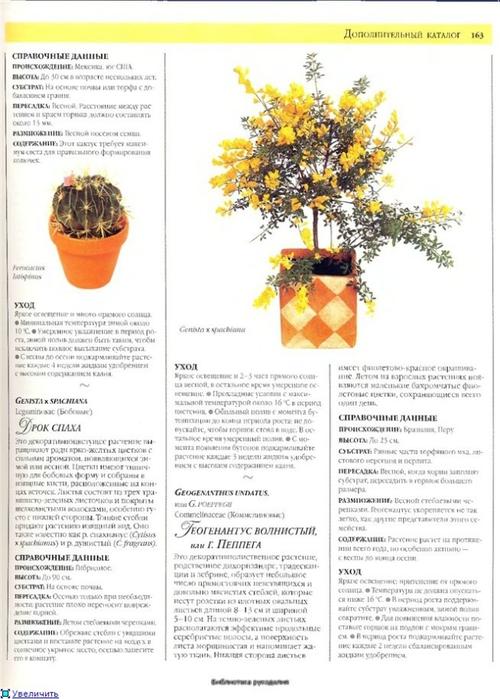 комнатные растения (109) (500x700, 215Kb)