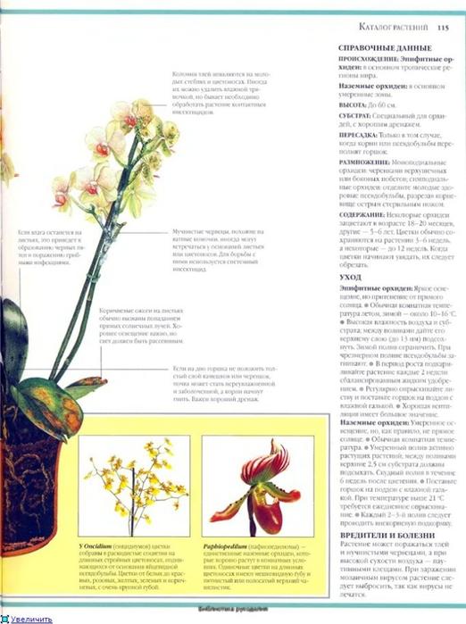 комнатные растения (114) (522x700, 200Kb)