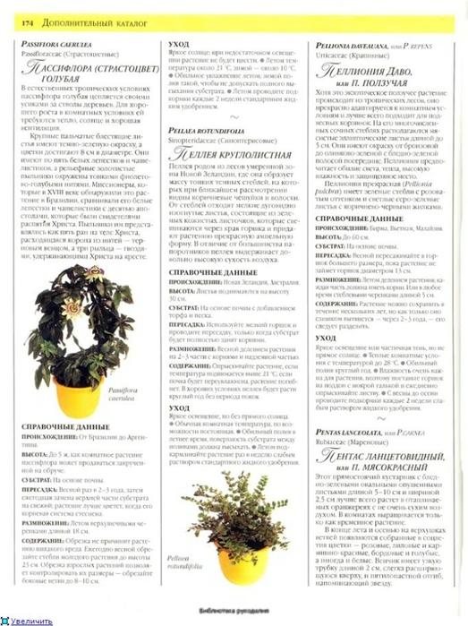 комнатные растения (129) (523x700, 237Kb)