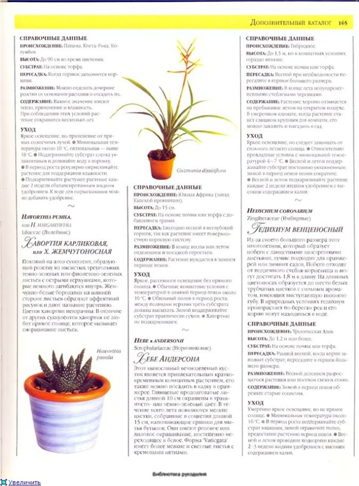 комнатные растения (134) (516x700, 231Kb)