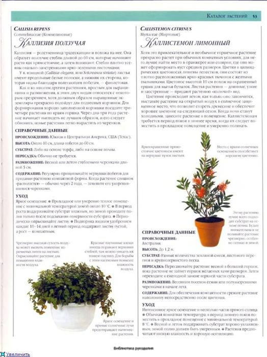 комнатные растения (136) (524x700, 237Kb)