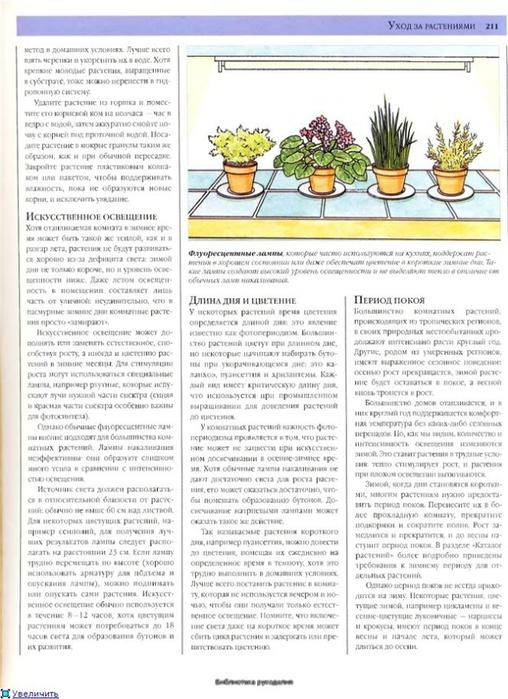 комнатные растения (138) (508x700, 248Kb)