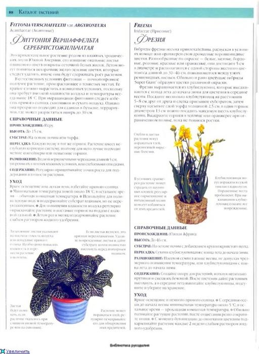 комнатные растения (140) (512x700, 227Kb)