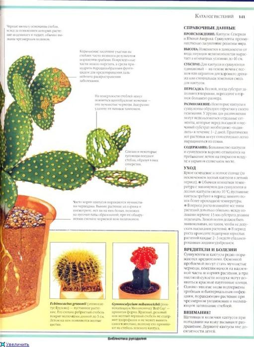 комнатные растения (142) (511x700, 232Kb)
