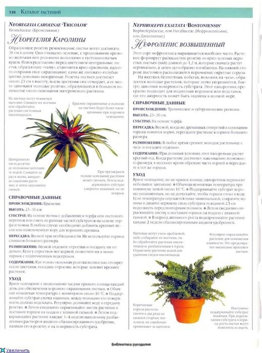 комнатные растения (144) (520x700, 234Kb)