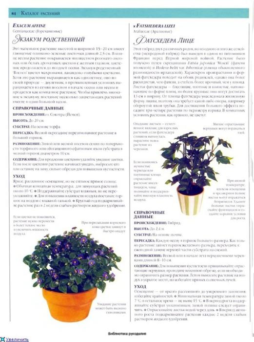 комнатные растения (146) (521x700, 235Kb)