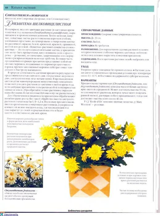 комнатные растения (148) (518x700, 239Kb)