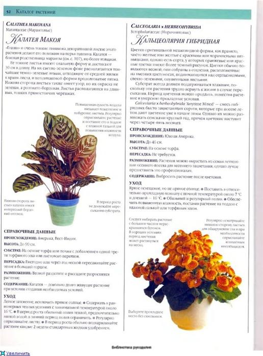 комнатные растения (150) (516x700, 235Kb)