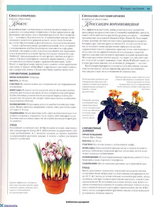 комнатные растения (154) (523x700, 241Kb)