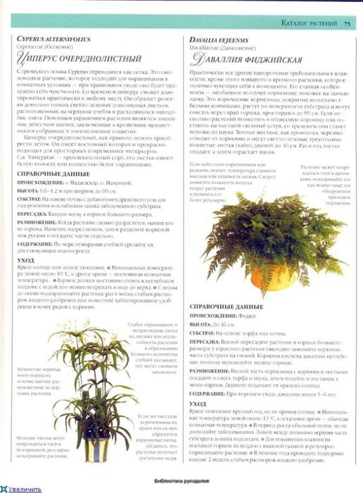 комнатные растения (158) (515x700, 229Kb)