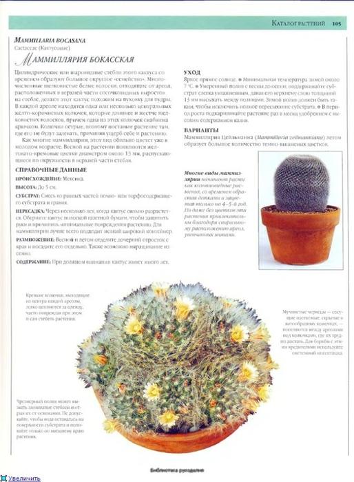 комнатные растения (160) (514x700, 207Kb)