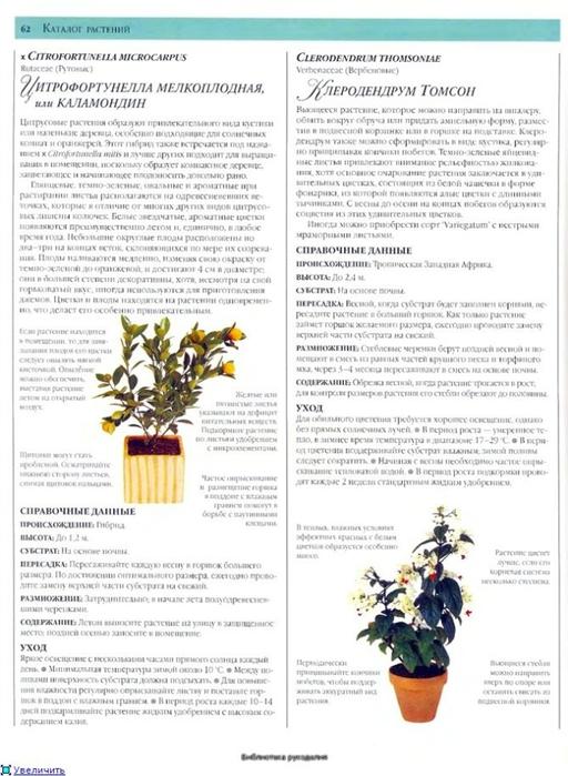 комнатные растения (162) (512x700, 227Kb)