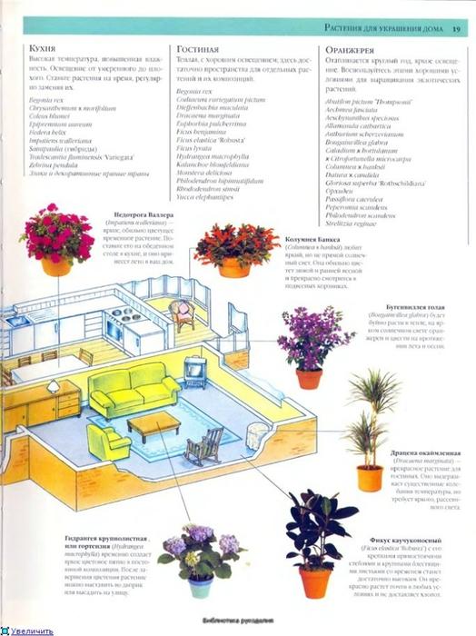 комнатные растения (164) (524x700, 222Kb)