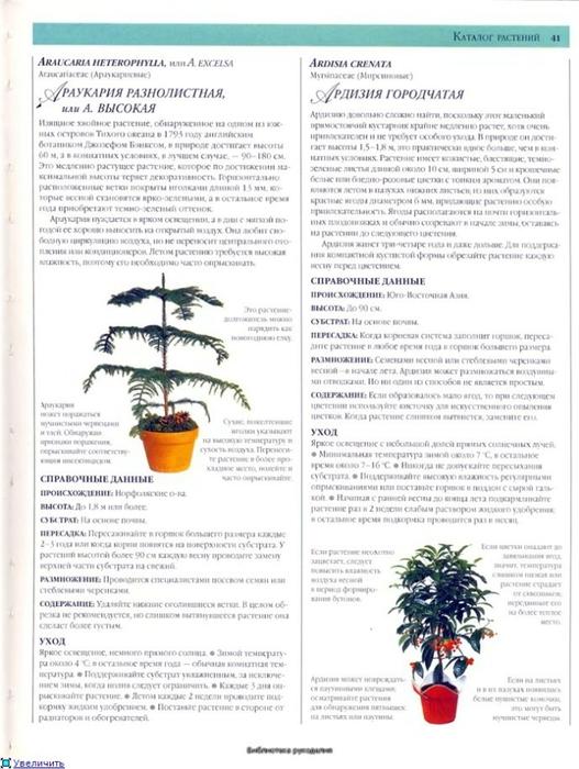 комнатные растения (166) (527x700, 235Kb)