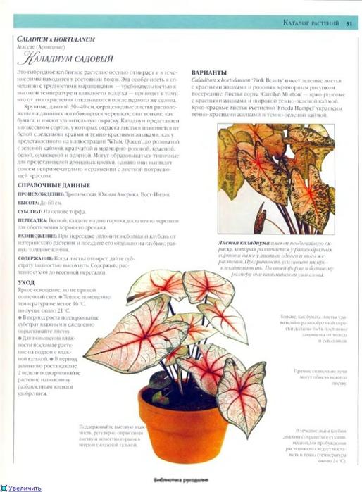 комнатные растения (171) (514x700, 211Kb)