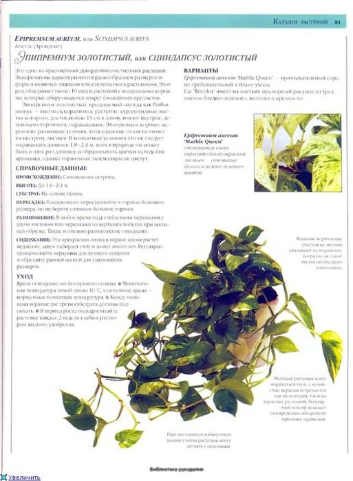 комнатные растения (173) (513x700, 217Kb)