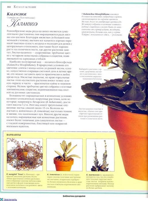комнатные растения (177) (515x700, 252Kb)