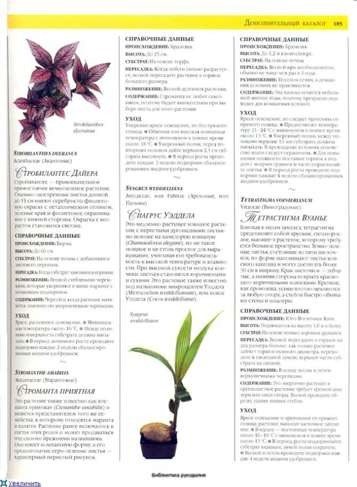 комнатные растения (181) (513x700, 219Kb)