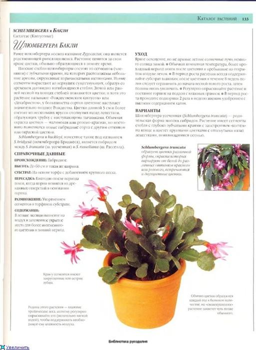 комнатные растения (183) (513x700, 212Kb)