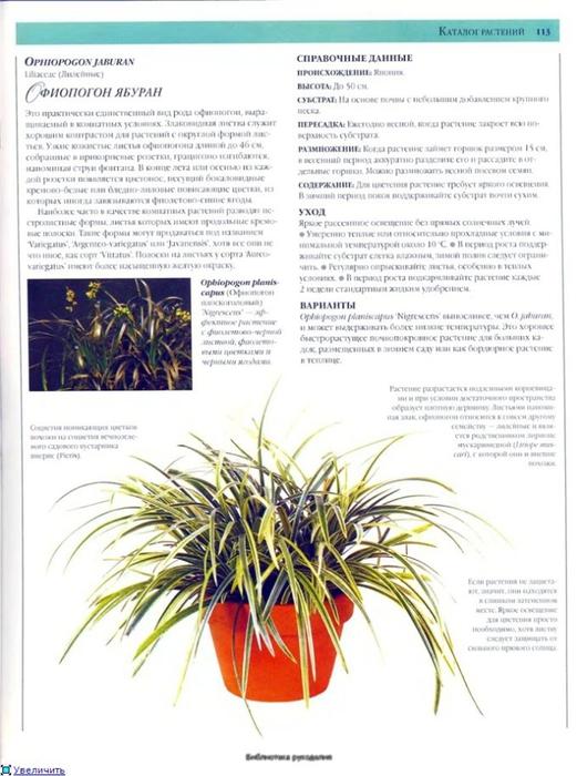 комнатные растения (187) (521x700, 231Kb)