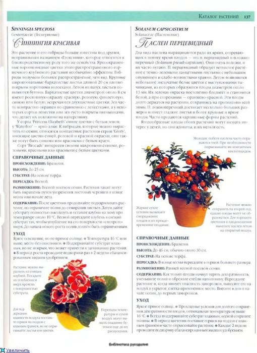 комнатные растения (189) (510x700, 242Kb)