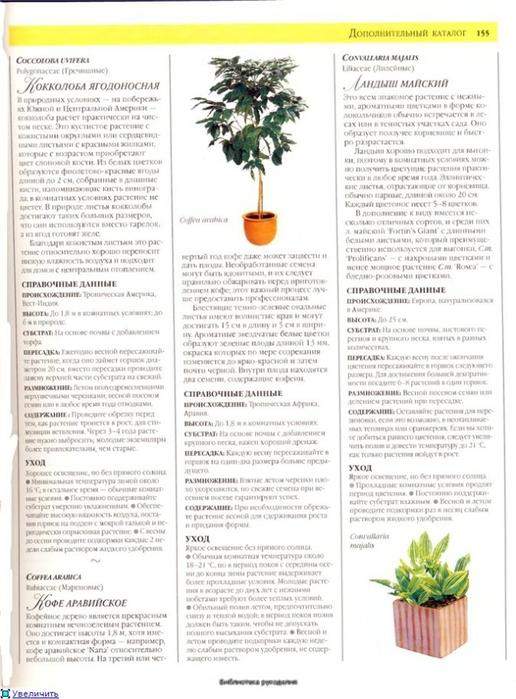 комнатные растения (191) (516x700, 241Kb)