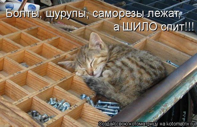 kotomatritsa_e100 (640x412, 65Kb)